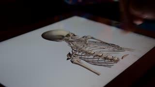 Skeleton and skull bones.