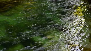 River, water video background