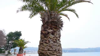 Climate change, palm and snow