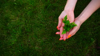Botanist Girl Holding in Hand Small Twig With Leaves on Background of Green Lawn.
