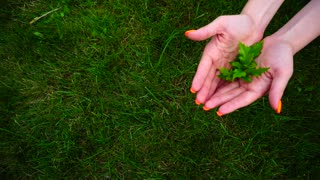 Girl Holding Green Plant on Background of Green Lawn.