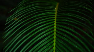 night in jungles, beautiful palms plant with long leaves
