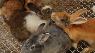 Slow motion rabbits of different colors in cage, farmer growing for sale. Concept of entertainment, travelling and cattle breeding. Fluffy animals sniffing each other snuggling up.