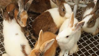 Slow motion rabbits sitting in cage, fluffy animals of different colors jumping sniffing. Concept of investigations, travelling and science. Fauna members moving noses and long ears.