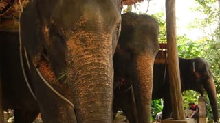 Slow motion three elephants eating greenery in shadow, children come to farm for excursion. Concept of entertainment, travelling and tourism. People working near pavilion with animals