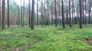 Flight Between Trees In Forest 11