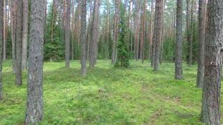 Flight Between Trees In Forest 2