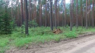Flight Between Trees In Forest 7