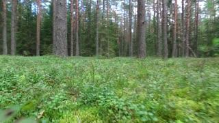 Low Flight Between Trees In Forest 2