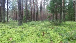 Low Flight Between Trees In Forest 4