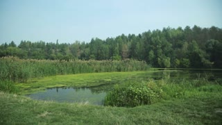 Calm swampy river in forest, summer daytime meadow. Steadycam pan from left to right.