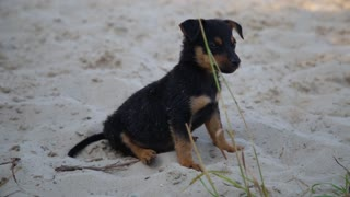 Cute puppy on wet beach sand looking into camera
