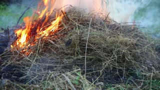 The dry grass in the field burns inflated by a wind
