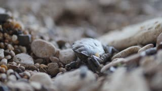Close up macro shot of crab walking on rock beach shore of sea