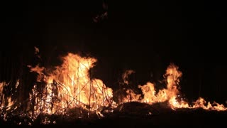 Forest burns out of control night. Flame burning on grass in countryside. Real fire background