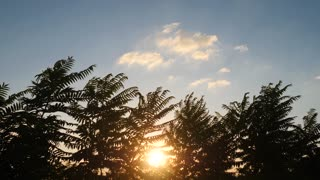 Sunset with Tropical Palm Tree Silhouette in slow motion.