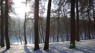 Walking in the woods. Steadicam shot. Winter forest park at sunset