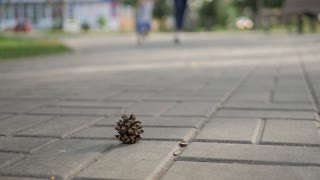 A child raises a fir cone lying on a road in the park.