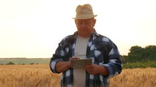 Adult farmer with portable tablet computer in wheat field at sunset using specialized app. Modern farming concept, advanced technology in agriculture.