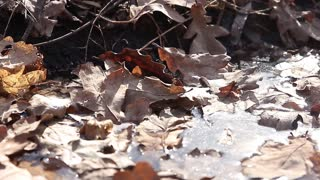 Autumn oak leaves background texture. Fallen foliage seasonal abstract. photographed close-up of old autumn leaves on the ground.