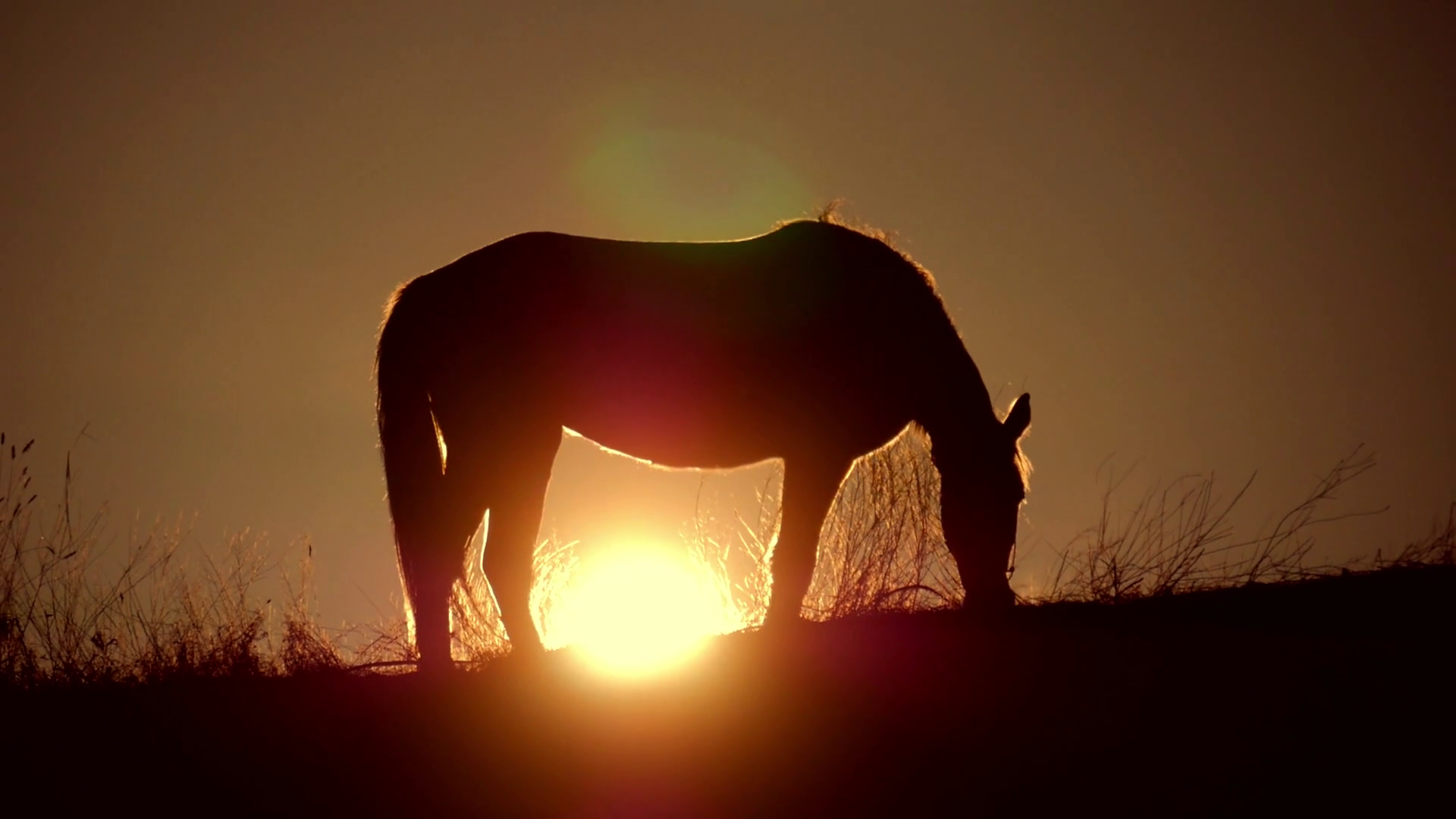 Beautiful Horse Silhouette On A Sunset Background Stock Video Footage Storyblocks