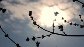 Blooming tree with flowers in spring. Beautiful soft focus footage of spring flowers. The rays of the sun through the tree.