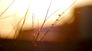 Brown grass field with bokeh and sunset light background.