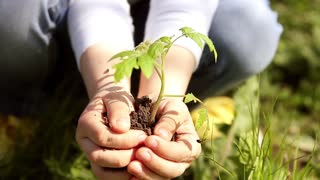 Children hands holding young plant against spring green background. Ecology concept