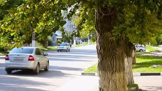 City traffic, focus on the tree