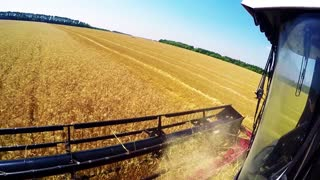 Close up of a harvester cropping the field. Harvester machine to harvest wheat field working. Combine harvester agriculture machine harvesting golden ripe wheat field. Agriculture