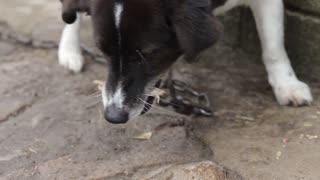 Close-up of Dog Eating Bone Outside