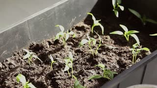 Close-up of green seedling growing out of soil