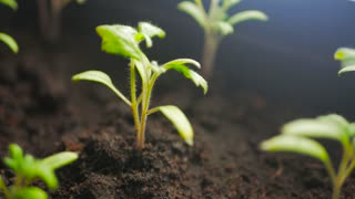 Close-up of young plant growing from soil background, low angle view.