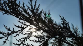 Close up tree branches with setting sun behind