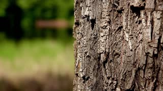 Close up trunk of tree background with forest.