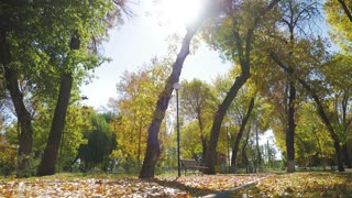 Colorful leaves in the autumn in the park.