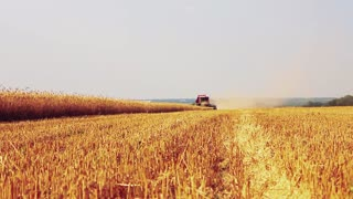 Combine harvester in action on wheat field. Harvesting is the process of gathering a ripe crop from the fields.
