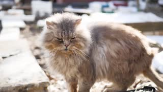 Cute street cat with funny faces.