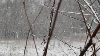 Falling snow in the forest, the beginning of winter.