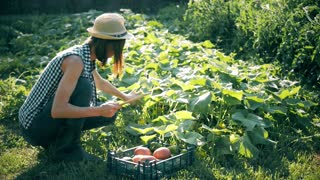 Farmer girl with digital tablet, vegetables crop in the kitchen garden. Harvest time. Family farmers. The concept of organic food.