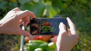Farmer woman taking photo of harvest vegetables with cellphone in garden.