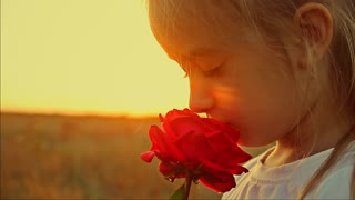 Female smelling a rose flower. Love and smell concept.