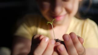 Girl holding young green plant in hands. Macro close up of baby hands holding small green plant. Ecology concept