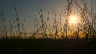 Grass and Sunset landscape.