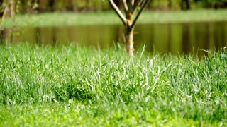 Green grass against the background of the river.