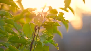 Green leaves are highlighted by sun. Beautiful natural green sunshine bokeh background.