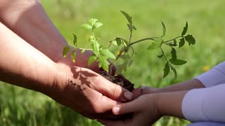 Hands of elderly woman and baby holding a young plant against a green natural background in spring. Ecology concept