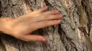 Hands of mother and daughter on old tree bark. Woman hand with red manicure on rough tree trunk. Gentle female palm with white pale skin and beautiful nails on rough tree bark.