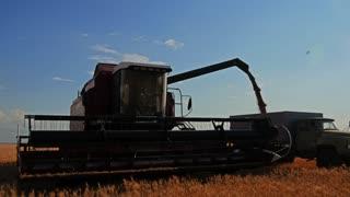 Harvester combine pours the grain into the truck on the field. Silhouette of combine harvester pours out wheat into the truck at sunset. Harvesting grain field, crop season.