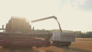 Harvester combine pours the grain into the truck on the field. Threshing machine pouring the just harvested wheat into a silo.
